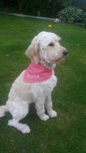 Hundehalstuch Rot/Pink HANNI